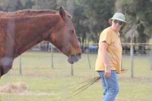 Anne Daimler working with her mare, Cherokee